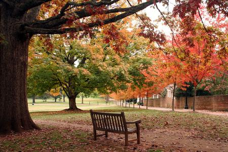 UVa in fall
